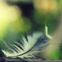 feathering weathering