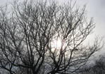 Branches by TheAmazingfulOne