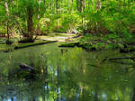 Great Swamp 9