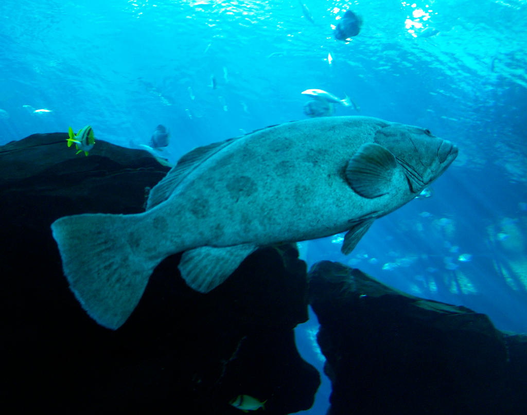 Georgia Aquarium 2 By Dracoart Stock On Deviantart