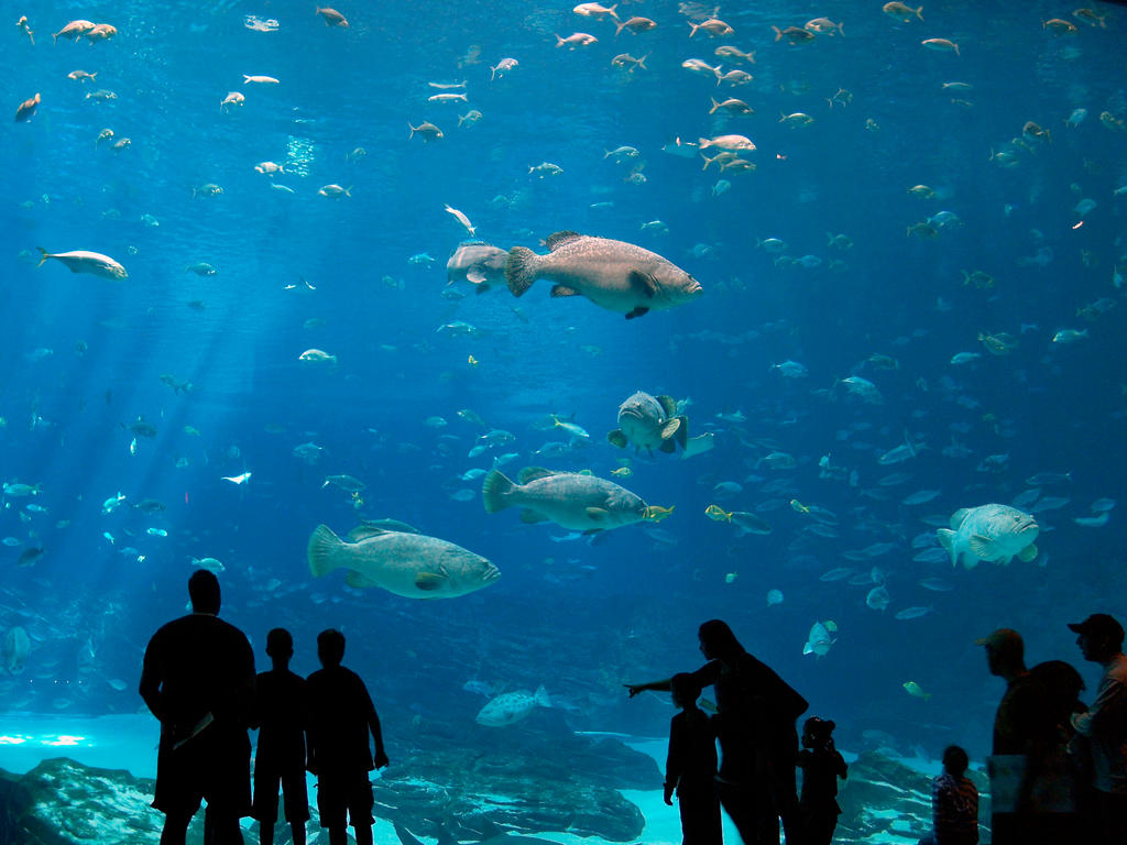Georgia aquarium 9 by dracoart stock on deviantart Aquarium in georgia