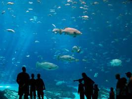 Georgia Aquarium 9 by Dracoart-Stock
