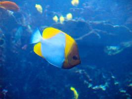 Georgia Aquarium 15 by Dracoart-Stock