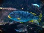 Georgia Aquarium 16