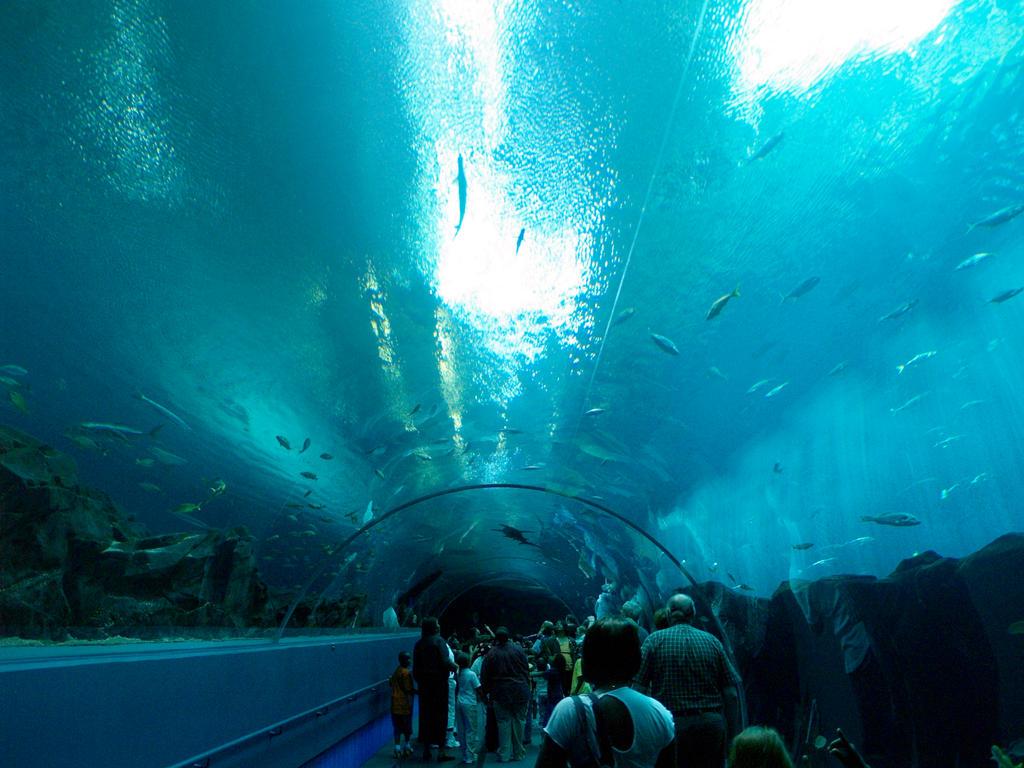 Georgia Aquarium 24