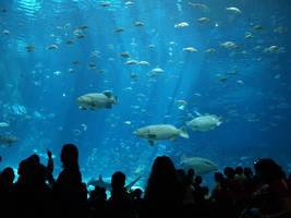 Georgia Aquarium 27 by Dracoart-Stock