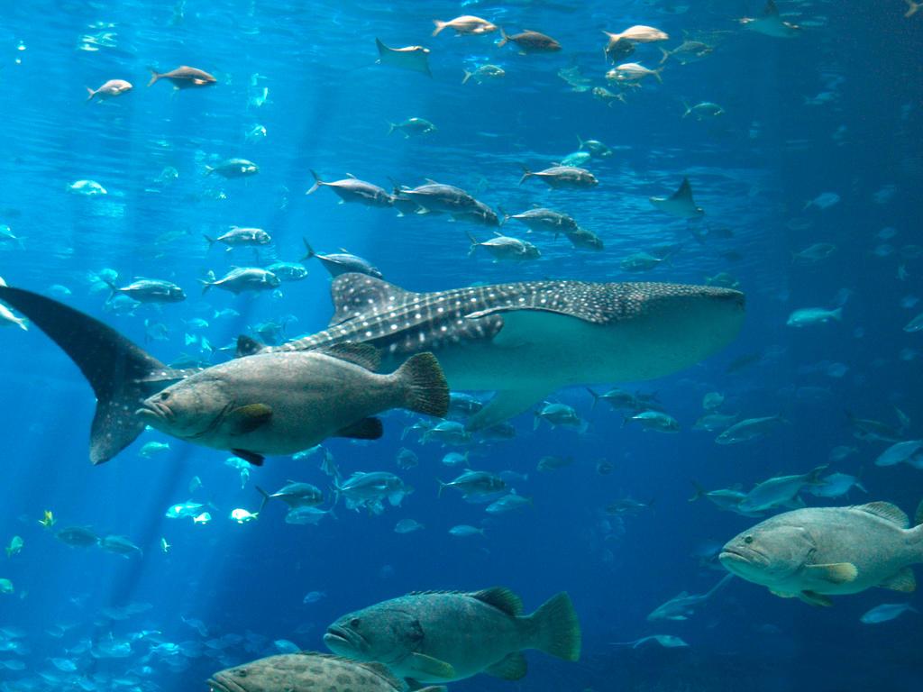 Georgia Aquarium 35 By Dracoart Stock On Deviantart
