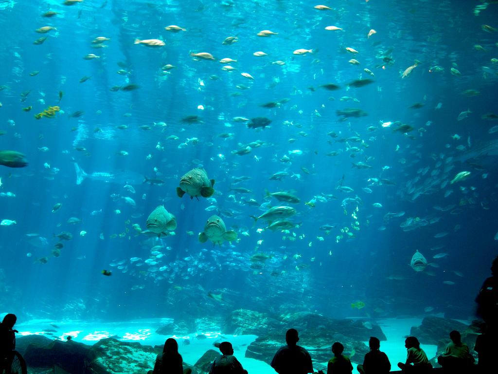 Georgia Aquarium 43
