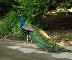 Philadelphia Zoo 3