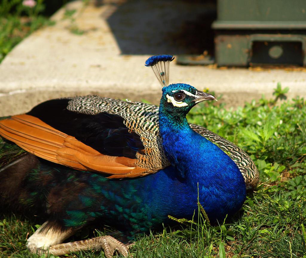 Philadelphia Zoo 5 by Dracoart-Stock