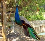 Philadelphia Zoo 7