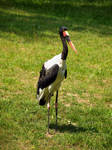 Philadelphia Zoo 28
