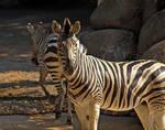 Philadelphia Zoo 49