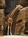 Philadelphia Zoo 58