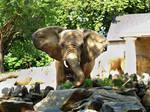 Philadelphia Zoo 61