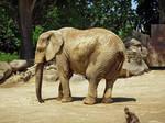 Philadelphia Zoo 63