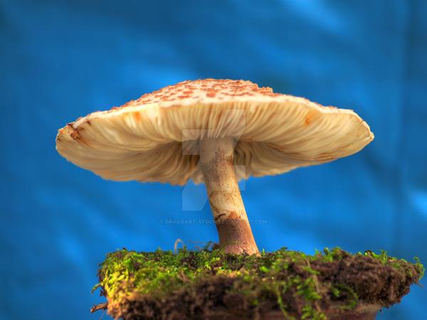 HDR Mushroom 2 by Dracoart-Stock