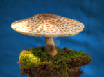 HDR Mushroom 3