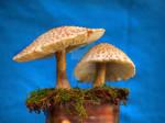 HDR Mushrooms 6