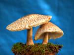 HDR Mushrooms 8