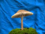 More HDR Mushrooms 1