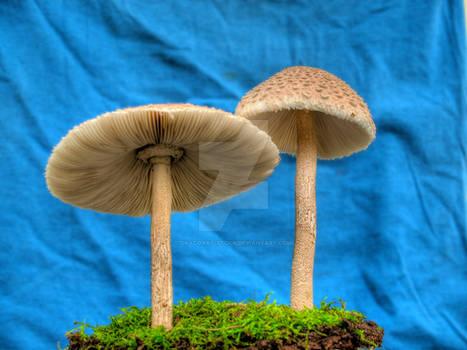 More HDR Mushrooms 3
