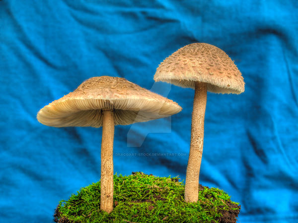 More HDR Mushrooms 4 by Dracoart-Stock