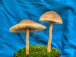 More HDR Mushrooms 4