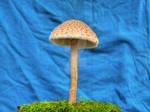 More HDR Mushrooms 6