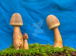 More HDR Mushrooms 7