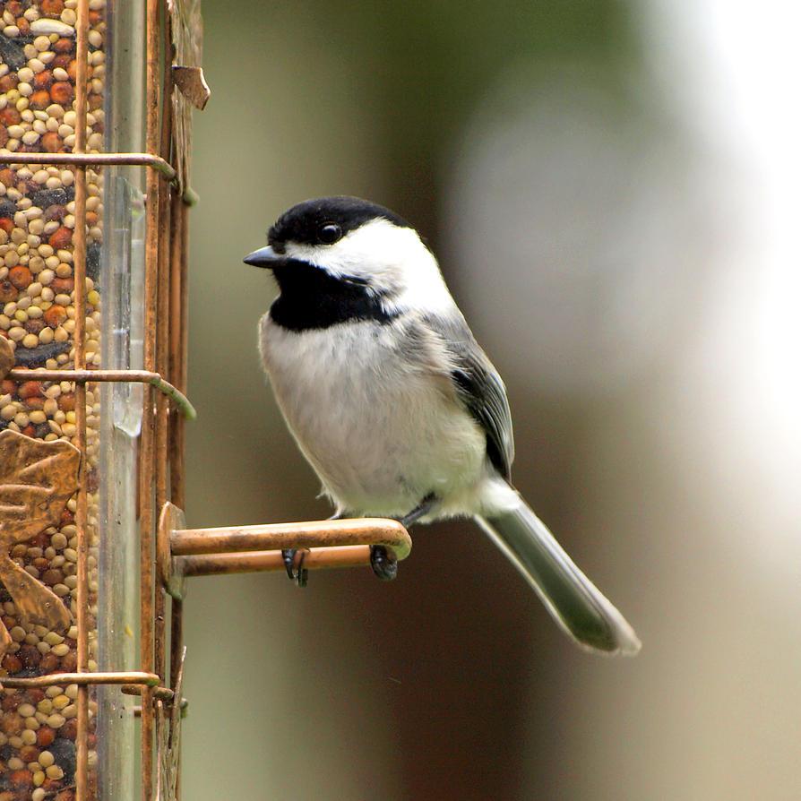 Bird 5 by Dracoart-Stock