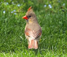 Bird 12 by Dracoart-Stock
