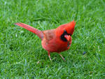 Bird 23