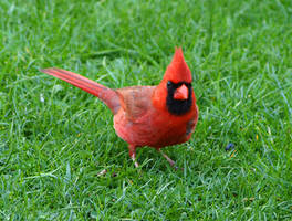 Bird 24 by Dracoart-Stock