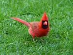 Bird 24