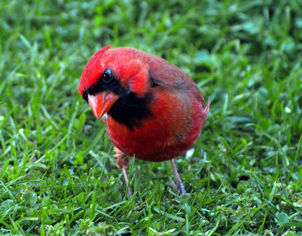 Bird 25 by Dracoart-Stock