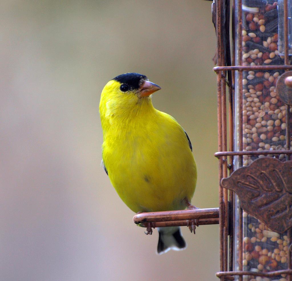 Bird 28 by Dracoart-Stock