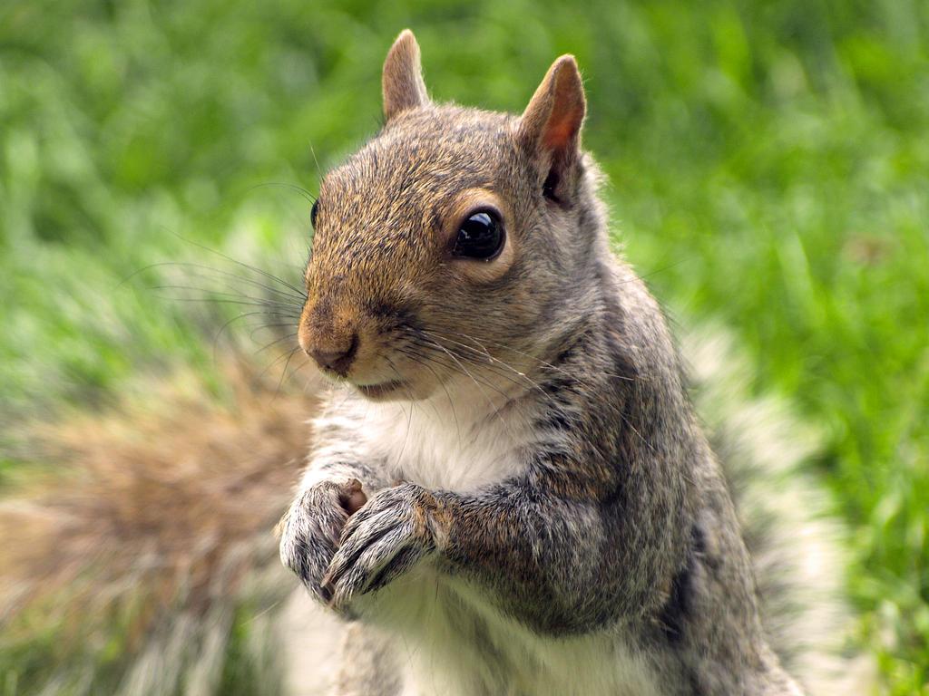 Squirrel II: The Return by Dracoart-Stock