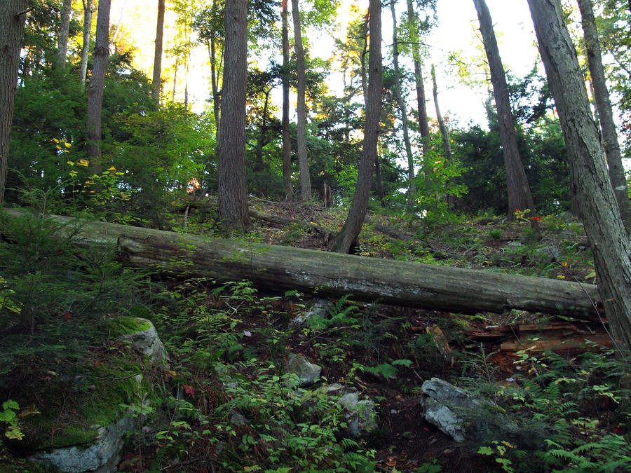 Ricketts Glen State Park 1 by Dracoart-Stock