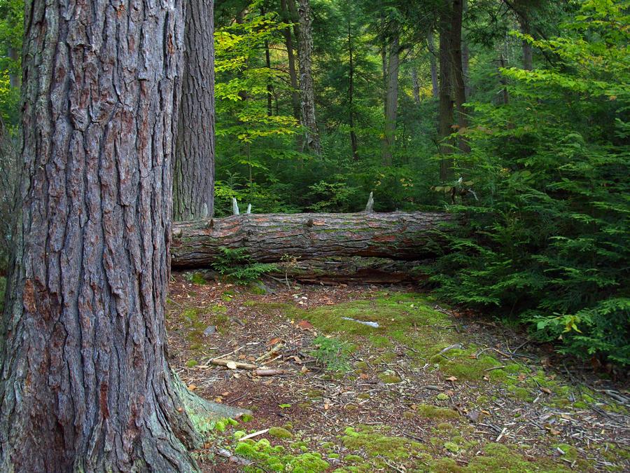 Ricketts Glen State Park 3 by Dracoart-Stock