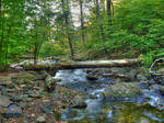 Ricketts Glen State Park 17