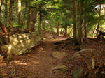 Ricketts Glen State Park 111