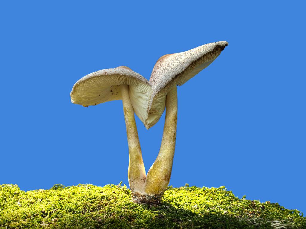 More Mushrooms 14 by Dracoart-Stock