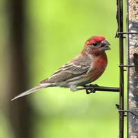 Birds of Spring 6 by Dracoart-Stock