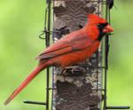 Birds of Spring 9