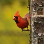 Birds of Spring 12