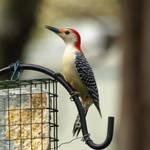 Birds of Spring 23