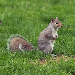 Squirrelzzz  1