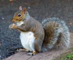 Squirrelzzz  4
