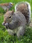 Squirrelzzz  7